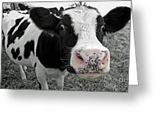 Something Kinda Moo Greeting Card