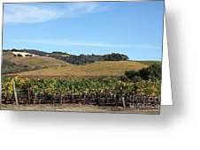 Sonoma Vineyards - Sonoma California - 5d19309 Greeting Card