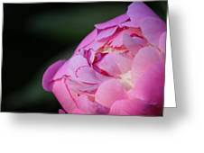 Sorbet Peony Greeting Card by Ruthie Lombardi