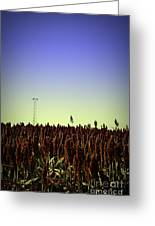 Sorghum Fields Forever Greeting Card