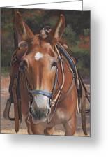 Sorrel Mule Greeting Card