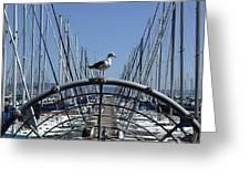South Beach Seagull Greeting Card