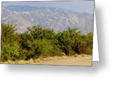 South Central Arizona Stitch Greeting Card