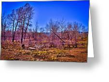 South Platte Park Landscape Greeting Card