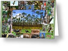 Southeastern Pine Forest Wildlife Poster Greeting Card