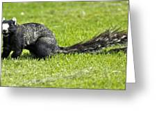 Southern Fox Squirrel Greeting Card by Phill Doherty