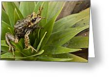 Southern Frog Newly Discovered Species Ecuador Greeting Card
