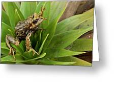 Southern Frog Pristimantis Sp, Newly Greeting Card