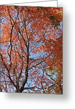 Southern Illinois Maple Greeting Card