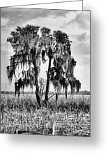 Southern In Black And White Greeting Card