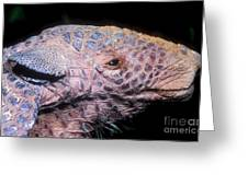 Southern Naked-tail Armadillo Greeting Card