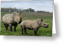 Southern White Rhinos Greeting Card