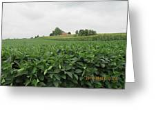 Soy Beans And Red Barn Greeting Card