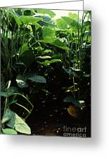 Soybean Leaves Greeting Card