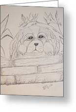 Spaniel Pup Greeting Card