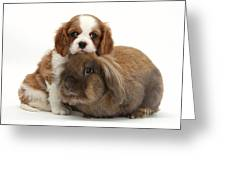 Spaniel Pup With Rabbit Greeting Card