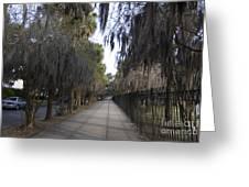 Spanish Moss Sidewalk Greeting Card