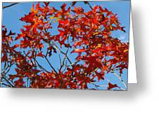 Spanish Oak Tree In Texas Greeting Card by Rebecca Cearley