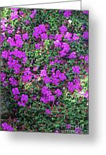 Spanish Shawl Flowers Greeting Card