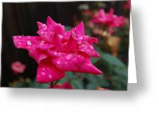 Sparkled Rose Greeting Card by Beverly Hammond
