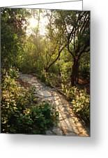 Sparkling Dawn On A Woodland Path Greeting Card