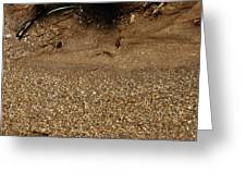 03b6ee4282fff6 Sparkling Fools Gold Pyrite Photograph by LeeAnn McLaneGoetz ...
