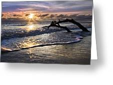 Sparkly Water At Driftwood Beach Greeting Card