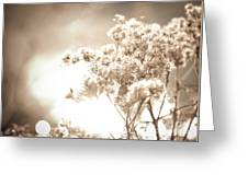 Sparkly Weeds In Sepia Greeting Card
