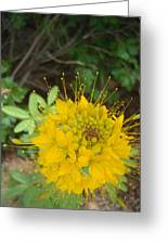 Yellow Bee Plant Sparks Greeting Card