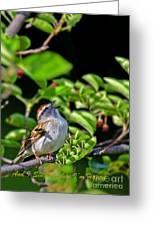 Sparrow 1 Greeting Card