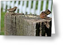 Sparrow And Chipmunk Coexist Greeting Card