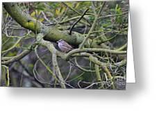 Sparrow Bird Perched . 40d12307 Greeting Card