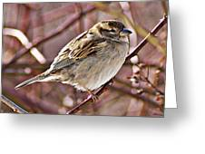 Sparrow II Greeting Card