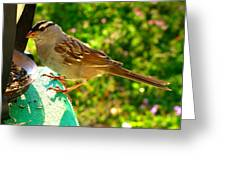 Sparrow In Morning Light  Greeting Card