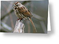 Sparrow Iv Greeting Card