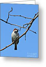 Sparrow On The Branch Greeting Card