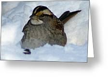 Sparrow V Greeting Card