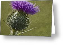 Spear Thistle With Texture Greeting Card
