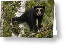 Spectacled Bear Tremarctos Ornatus Cub Greeting Card