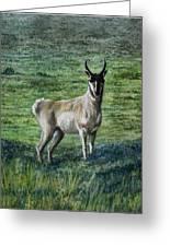 Speed Goat Greeting Card
