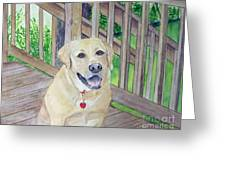 Spencer On Porch Greeting Card