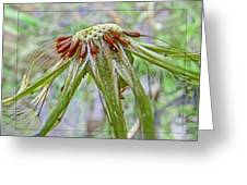 Spent Dandilion Greeting Card