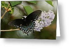 Spice Bush Swallowtail On Lilac Greeting Card