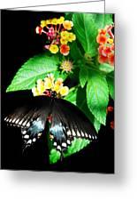 Spice Bush Swallowtail  Greeting Card
