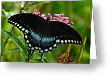 Spicebush Swallowtail Din038 Greeting Card