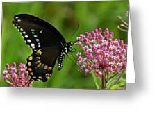Spicebush Swallowtail Din039 Greeting Card