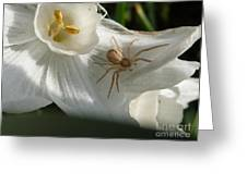 Spider In Narcissus Greeting Card