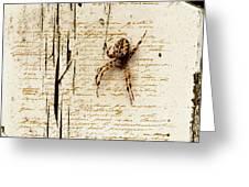 Spider Letter Greeting Card by Yvon van der Wijk