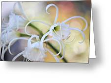 Spider Lily 3 Greeting Card