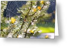 Spider On Web Greeting Card